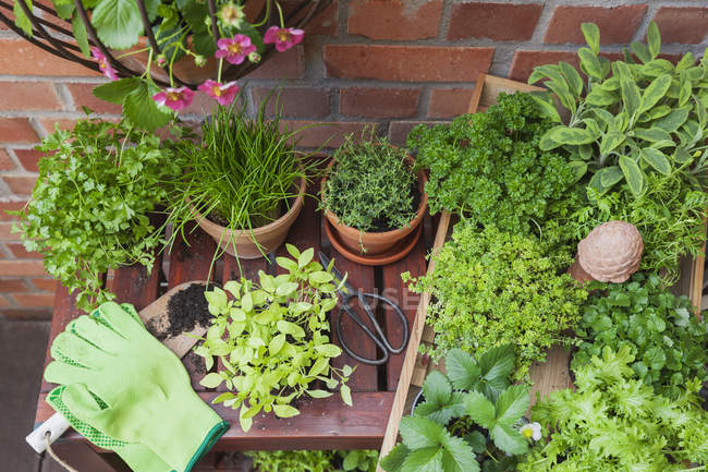 Various potted spice plants on terrace — Stock Photo