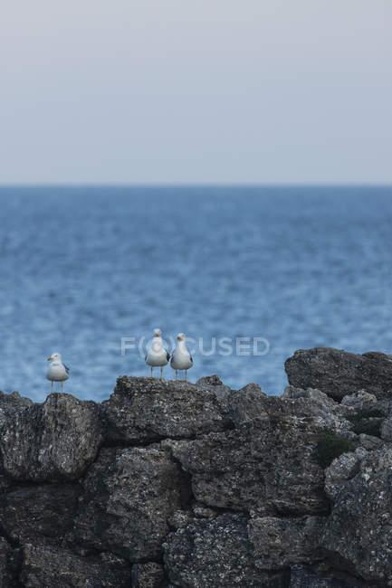 Іспанія, Таріфа, чайки на скелях — стокове фото