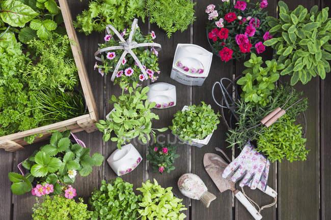 Planter des herbes et des fleurs dans des pots de stockage vintage pour l'agriculture d'intérieur — Photo de stock