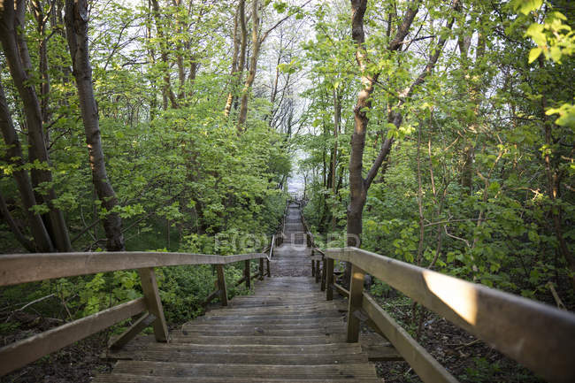Germany, Ruegen, Cape Arkona, Koenigstreppe, steps at Cape Arkona — Stock Photo