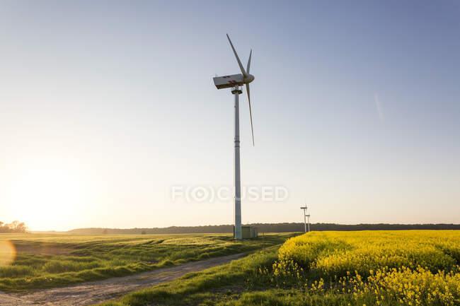 Germany, Ruegen, Cape Arkona, wind wheels at rape field — Stock Photo