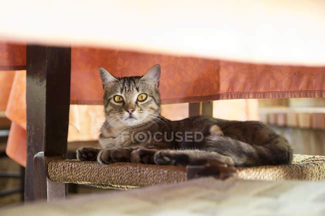 Katze liegt auf Stuhl unter Tisch — Stockfoto