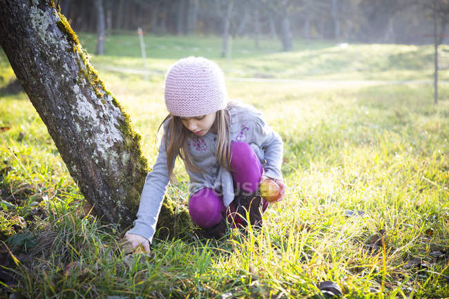 Girl collecting apples on a meadow in autumn — Stock Photo