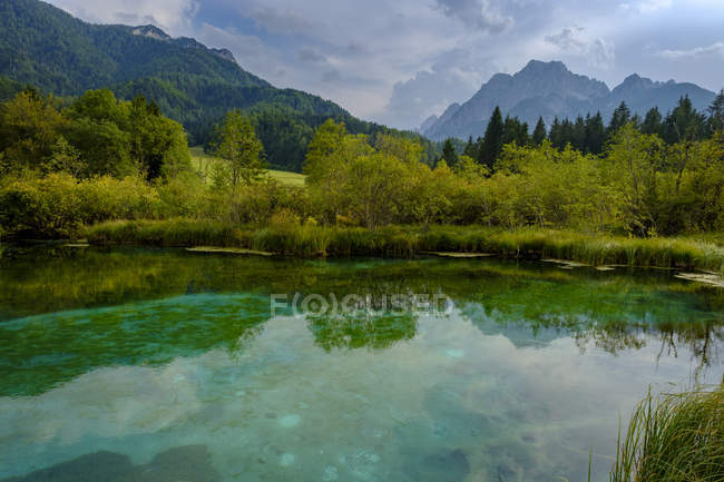 Slovénie, Gorenjska, près de Ratece, Sava Dolinka, source, Lac Zelenci — Photo de stock