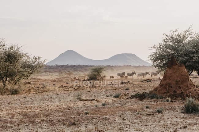 Africa, Namibia, Reserva de caza privada Erindi - foto de stock