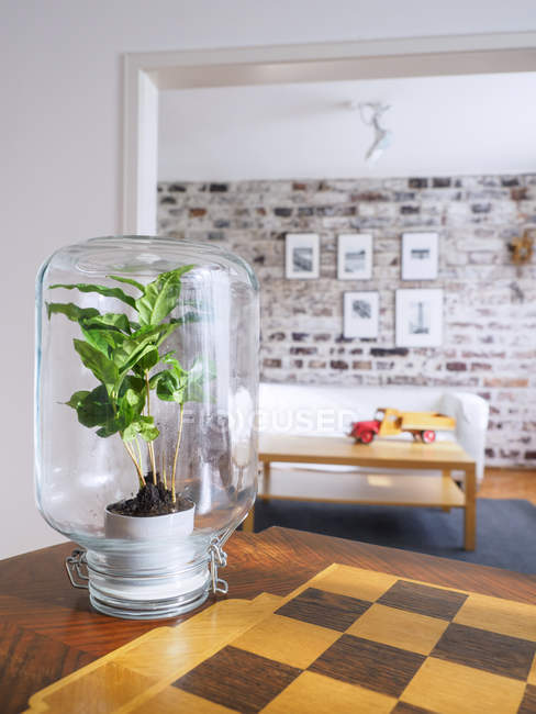 Microclimate, coffee plant under glass, water, recycled, biotope in glass — Stock Photo