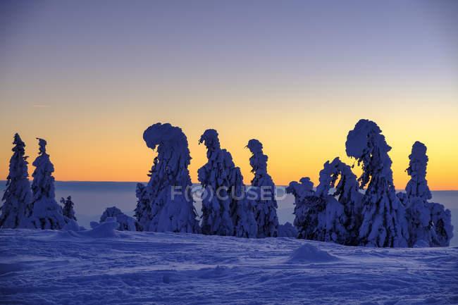 Allemagne, Bavière, Forêt bavaroise en hiver, Grand Arber, Arbermandl, épinettes enneigées au coucher du soleil — Photo de stock