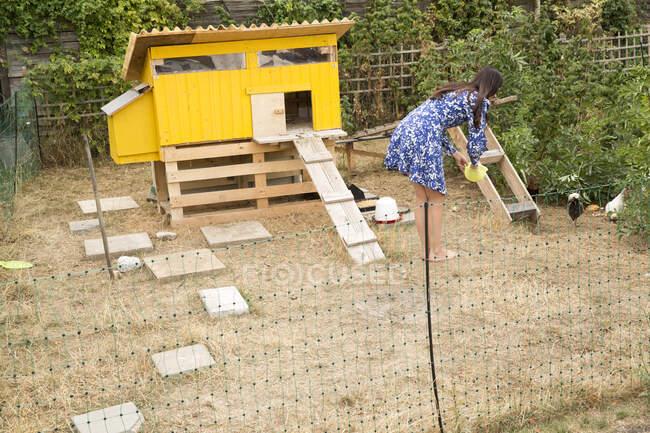 Женщина кормит цыплят в садике — стоковое фото