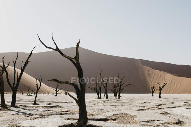 Namibia Namib Desert Namib Naukluft National Park
