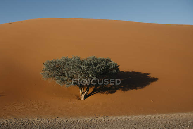 Namibie, désert du Namib, Parc national du Namib-Naukluft, Sossusvlei, Dune 45 — Photo de stock