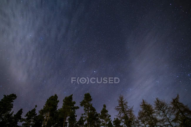 Шотландія, зоряне небо з вершинами дерев — стокове фото