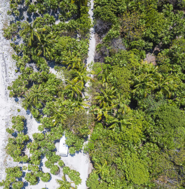 Mexico, Yucatan, Quintana Roo, Tulum, drone view of beach with palm trees — Foto stock