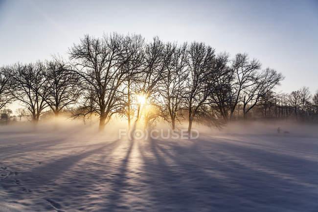 Alemanha, Landshut, paisagem nebulosa no inverno ao nascer do sol — Fotografia de Stock