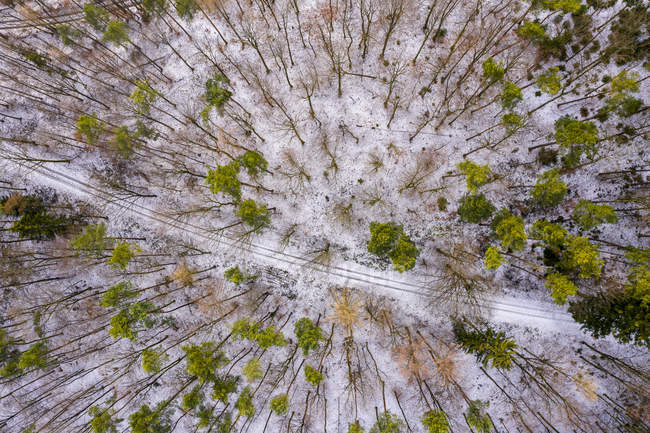 Германия, Баден-Вюртемберг, Ремс-Мурр-Крайс, Швабский лес, Воздушный вид на лес зимой — стоковое фото