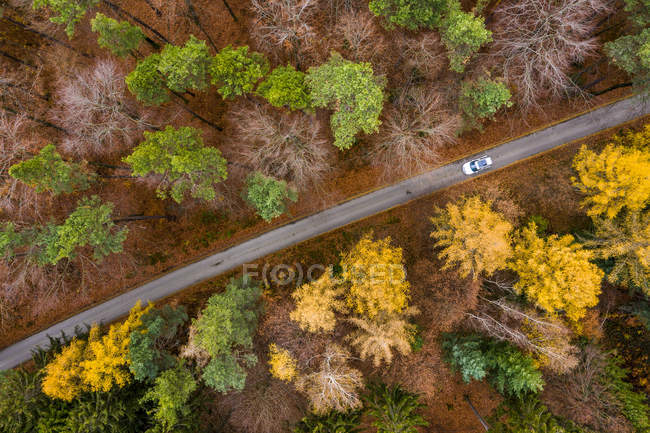 Germany, Baden-Wuerttemberg, Swabian Franconian forest, Aerial view of forest in autumn, forest road — Stock Photo
