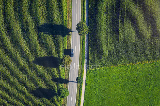 Germany, Chiemgau, country road and field in summer — Stock Photo