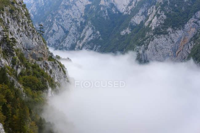 Чорногорія, провінція Плезіне, туман в долині піва — стокове фото