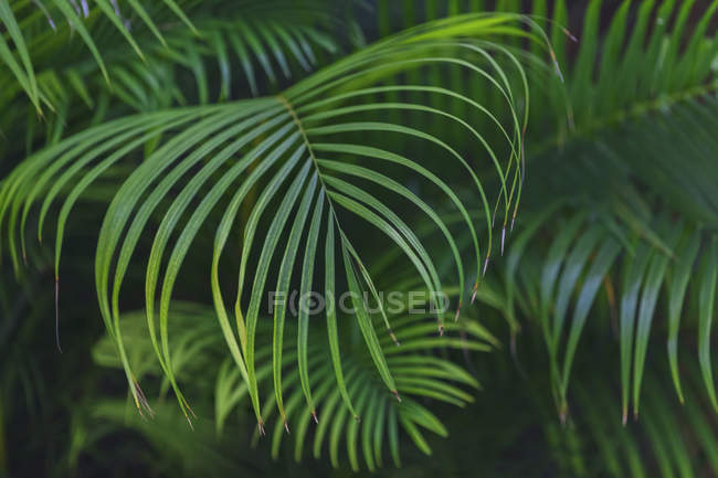 Мексика, Юкатан, Quintana Роо, Тулум, пальмове листя — стокове фото