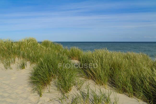 Dinamarca, Jutland, Skagen, Grenen, paisagem da Duna — Fotografia de Stock