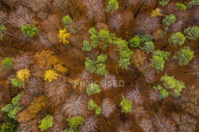 Германия, Баден-Вюртемберг, Швабский Франконский лес, Воздушный вид на лес осенью сверху — стоковое фото
