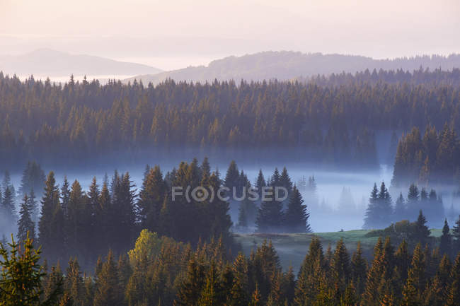Montenegro, Durmitor National Park,forest in morning mist, view from Curevac — Stock Photo