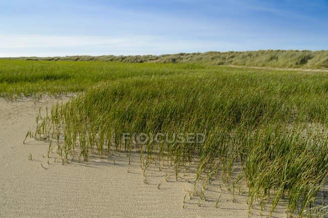 Дания, Jutland, Скаген, Гренен, дюны пейзаж — стоковое фото