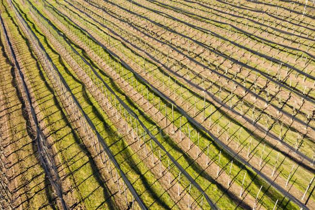 Alemanha, Baden-Wurttemberg, Remstal, Vista aérea de pomares no inverno — Fotografia de Stock