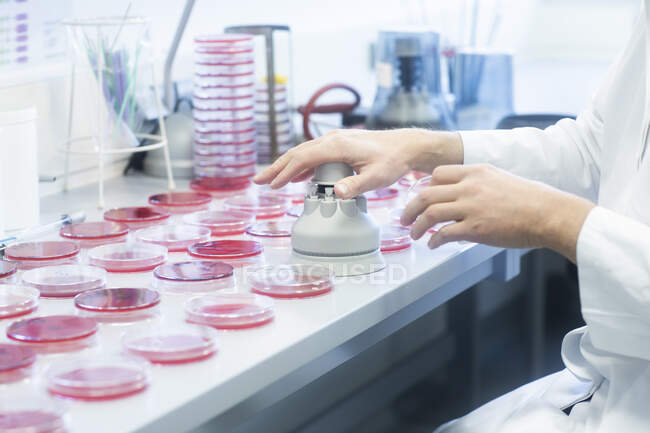 Petri dishes on lab table with punching machine — Stock Photo