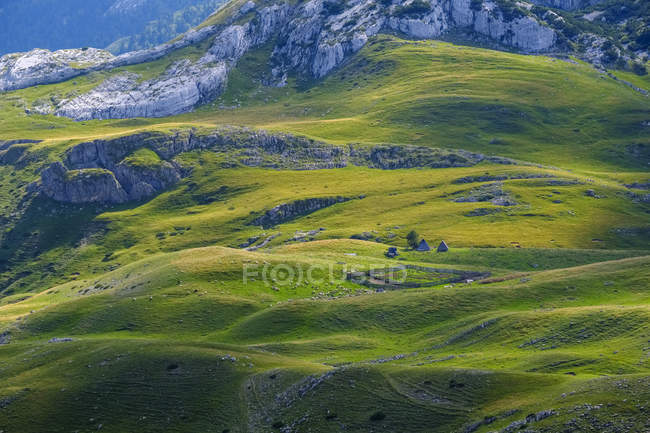 Montenegro, Durmitor National Park, flock of sheep on mountain pasture — Stock Photo