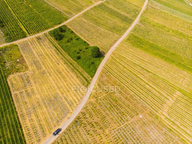 Germany, Cochem-Zell , vine yards, dirt road and car — Stock Photo