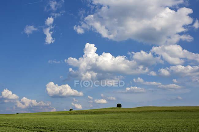 Germany, Rhineland-Palatinate, Eifel, view to grain fields — Stock Photo