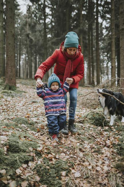 Мати з донькою і прикордонником Коллі в осінньому лісі. — стокове фото
