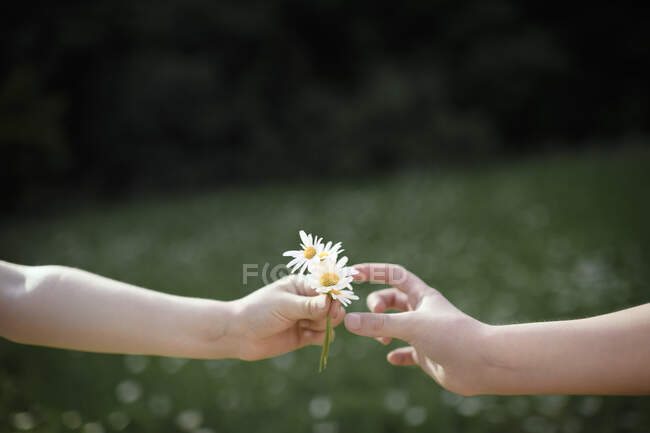 Close-up of hand handing over flowers — Stock Photo