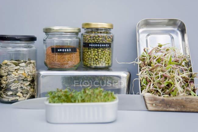Збереження глеків зерном, вибілювачів та крохмалю, домашні проростки. — стокове фото