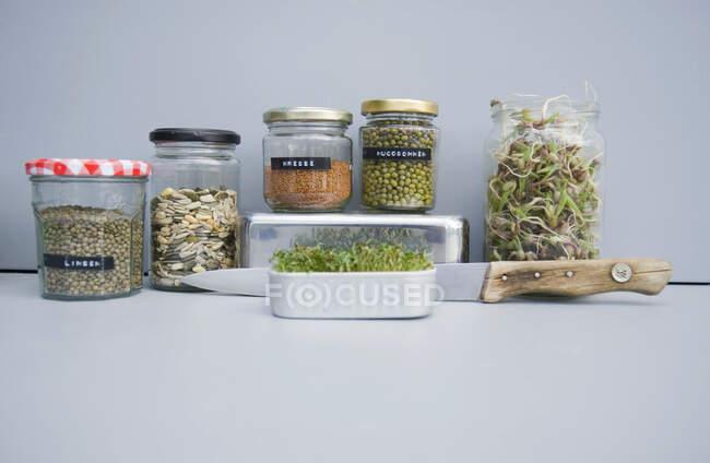 Conservación de frascos con granos, brotes de mungo y berros, brotes caseros - foto de stock