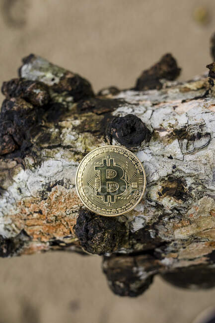 Bitcoin on a piece of bark — Stock Photo