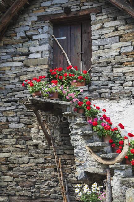 Suiza, Ticino, Sonogno, casas históricas típicas de piedra con flores de verano en la escalera - foto de stock