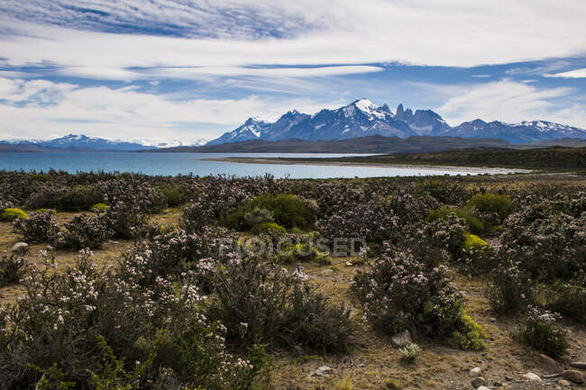 Chile, Patagonia, Torres del Paine National Park, scenic — Stock Photo