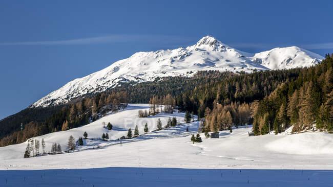 Швейцарія, Граубюенден, Італія, Південний Тіроль, Піц Лад на перевалі Решен взимку — стокове фото