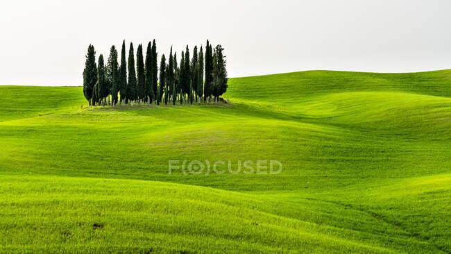 Italie, Toscane, pittoresque avec cyprès — Photo de stock