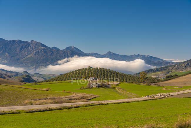 España, Andalucía, Provincia Málaga, Paisaje verde cerca de Ronda con casas rurales, ovejas - foto de stock