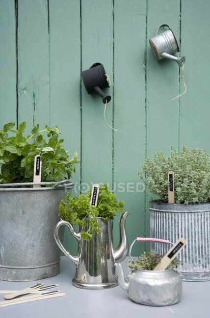 Primer plano de hierbas en macetas en varios recipientes - foto de stock