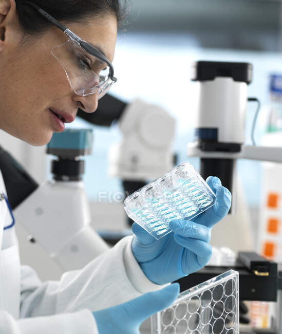 Biotech Research, Scientist viewing samples in multi well plate ready for analysis during a experiment in the laboratory — Stock Photo