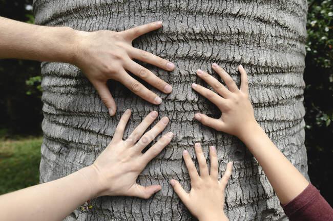 Quatro mãos tocando um tronco de árvore — Fotografia de Stock