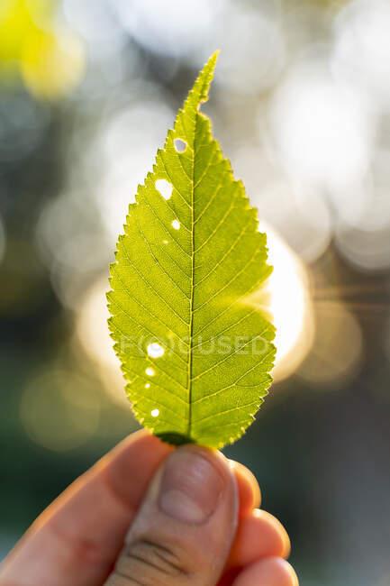 Mujer joven sosteniendo una hoja verde — Stock Photo