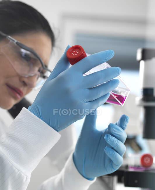 Исследование клеток человека, биолог женских клеток, изучающий колбу, содержащую стволовые клетки, культивируемую в красной среде роста в лаборатории — стоковое фото