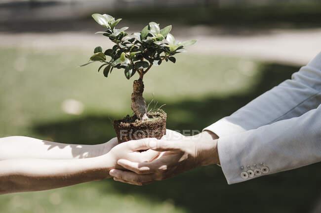Homem e menino segurando árvore bonsai — Fotografia de Stock