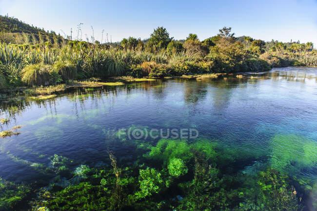Te Waikoropupu Springs, Takaka, Golden Bay, South Island, New Zealand — Stock Photo