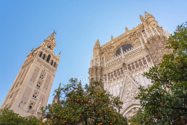 Cathedral of Seville and la Giralda, Seville, Spain — стокове фото
