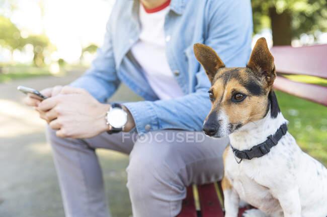 Ritratto di cane attento seduto sulla panchina accanto al suo proprietario — Foto stock